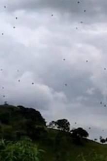 Viele schwarze Punkte: Hier regnet es Spinnen vom Himmel