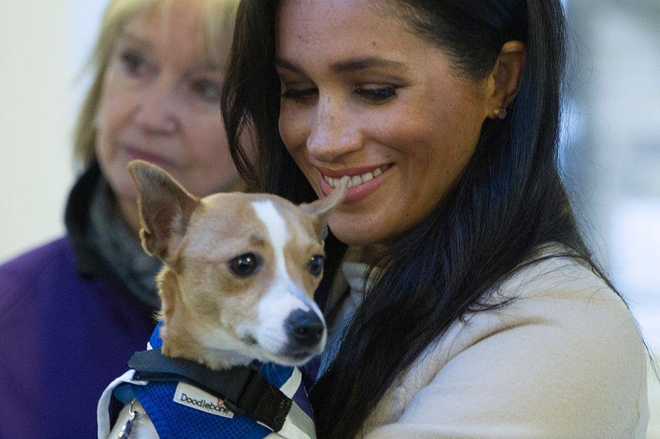 """Herzogin Meghan war von der """"Jack Russel""""-Hündin Minnie absolut begeistert - trotzdem kann sie sie nicht adoptieren."""
