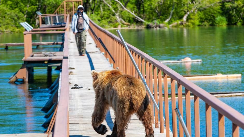 Unerwartete Begegnung mit einem Grizzlybär