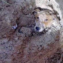 """Hund vergraben: Streunender Hund wird lebendig begraben, weil er eine """"Belästigung"""" sei"""