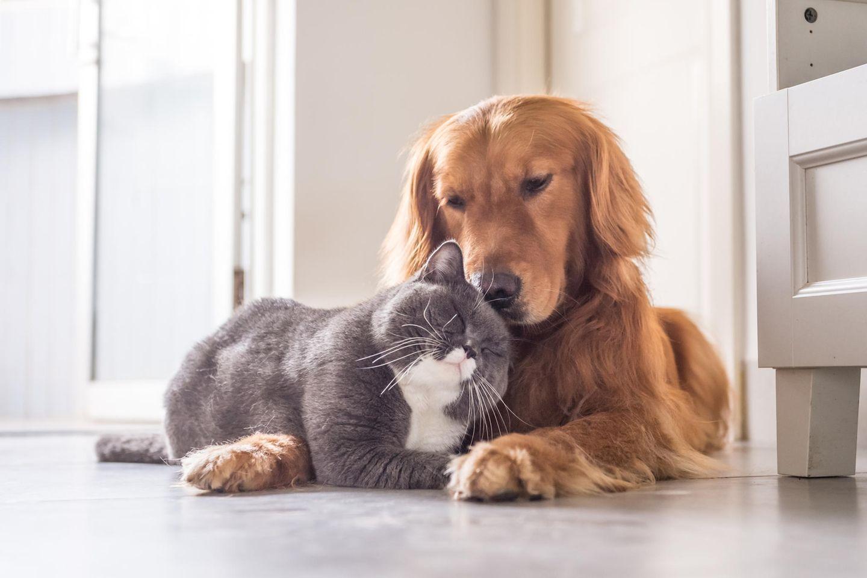 Hund und Katze schmusen miteinander