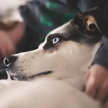 Machen Haustiere krank?: Mit diesen Krankheiten kann dein Hund dich anstecken