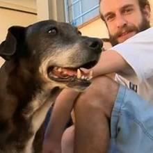 Dieser Hund schafft es auf die Ehrenliste einer Universität
