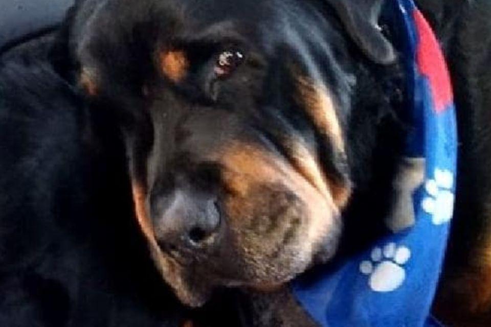 Hund trauert um toten Bruder