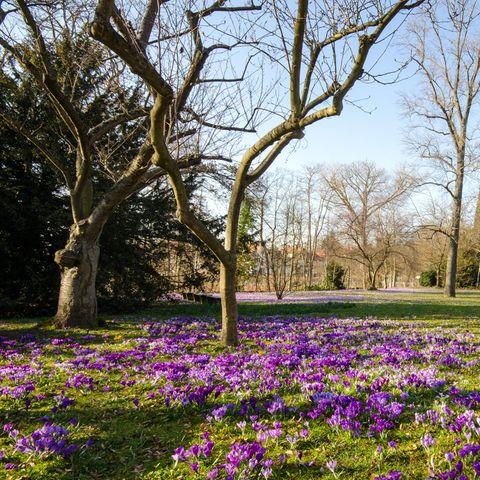 Der Februar bringt erste Frühlingsgefühle