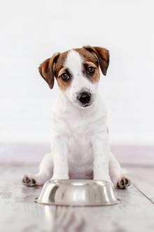 Hill's Pet Nutrition ruft Hundefutter zurück