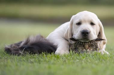 Mutterinstinkt: So herzlich kümmert sich diese Katzenmama um einen Hundewelpen