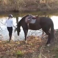 Witziges aus der Tierwelt: Dieses Pferd ist wasserscheu? Von wegen!