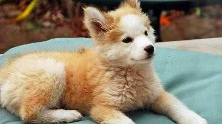 Hunde-Schicksal: Darum ist dieser ausgesetzte Welpe etwas ganz Besonderes
