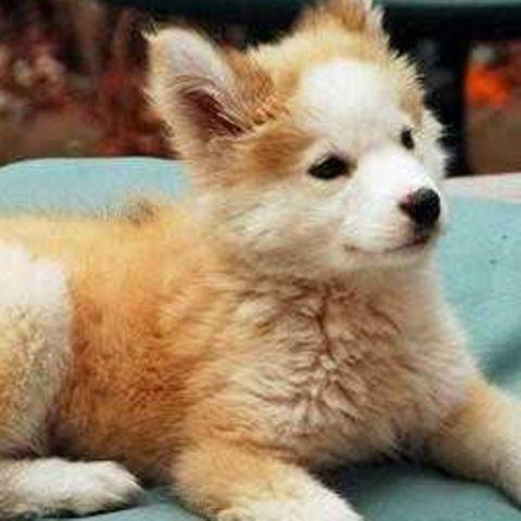 Tierischer Ausreißer: Hund kehrt nach acht Monaten zu seinem Herrchen zurück – die Freude ist riesig