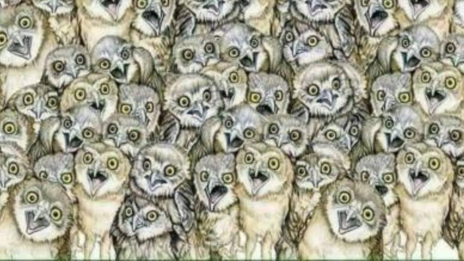 Suchspiel: In diesem Bild ist eine Katze versteckt