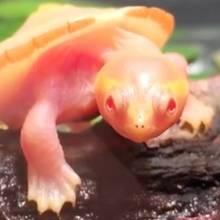 Schildkröte Hope: Aus diesem rührenden Grund ist sie ein Instagram-Star