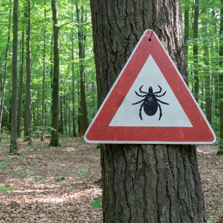 Zecken sind eine echte Plage in der Natur