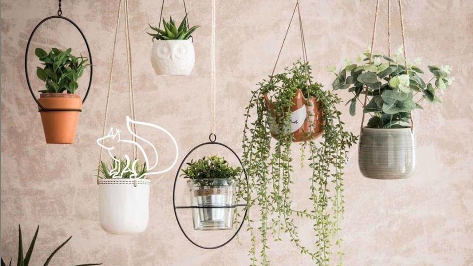 Schöne Zimmerpflanzen: Diese fünf Pflanzen verschönern Ihr Zuhause