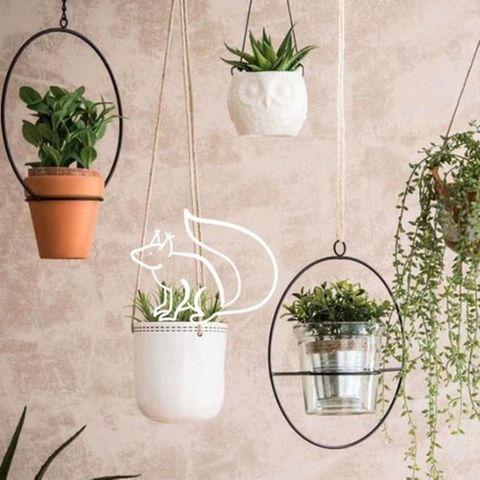 Zimmerpflanzen pflegen: Mit diesen sechs Tipps klappt's