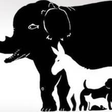 Bilderrätsel: Finden Sie alle 16 versteckten Tiere?