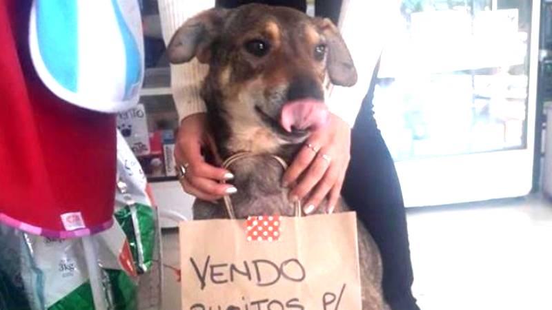 Krebskrankes Tier: So konnte Straßenhund Norberto gerettet werden