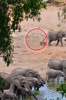 Wie erstaunlich: Fotograf bekommt einen rosa Elefanten vor die Linse