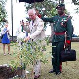 Bei seinem Termin im Regierungsgebäude pflanzt Charles einen Baum.