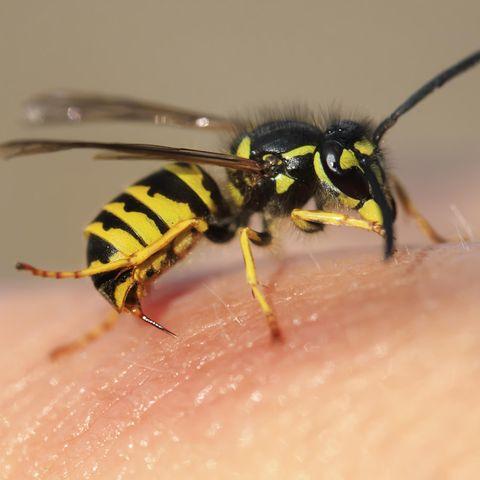 Ein anaphylaktischer Schock (allergischer Schock) kann durch einen Insektenstich ausgelöst werden