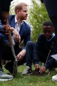 20. März 2019  Prinz Harry pflanzt mit den Kindern der katholischen Grundschule St. Vincent's in Acton einen Baum.