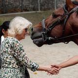 """Herzogin Camilla besucht auf Kuba auch das """"National Equestrian Centre""""."""