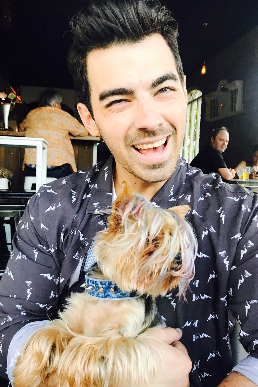 Die Frisur sitzt – sowohl bei Musiker Joe Jonas, als auch bei seinem kleinen Vierbeiner.