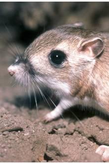 Oha!: Schlange gegen Ratte – wer gewinnt das ungleiche Duell?
