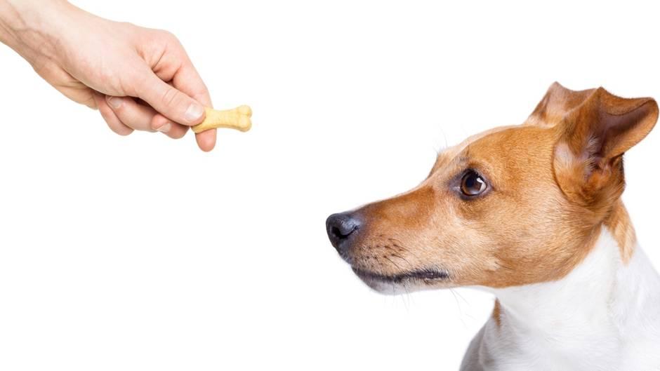 Studie: Hunde wissen ganz genau, wenn ein Mensch böse ist