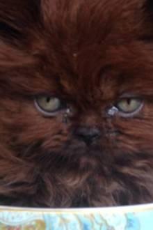 Adoptiertes Kätzchen ist nach einem Jahr kaum wiederzuerkennen