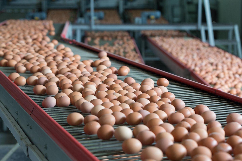"""""""Öko-Test"""" fällt ernüchterndes über zahlreiche Eier-Betriebe."""