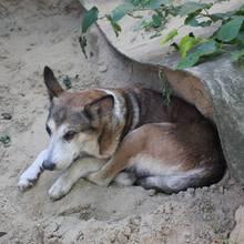 In Russland wurde ein Hund lebendig begraben