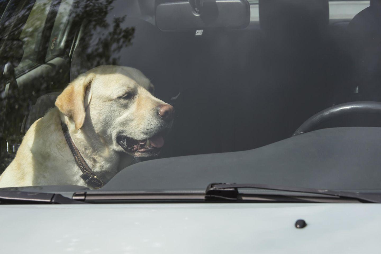 Hunde haben in geschlossenen Autos nichts zu suchen
