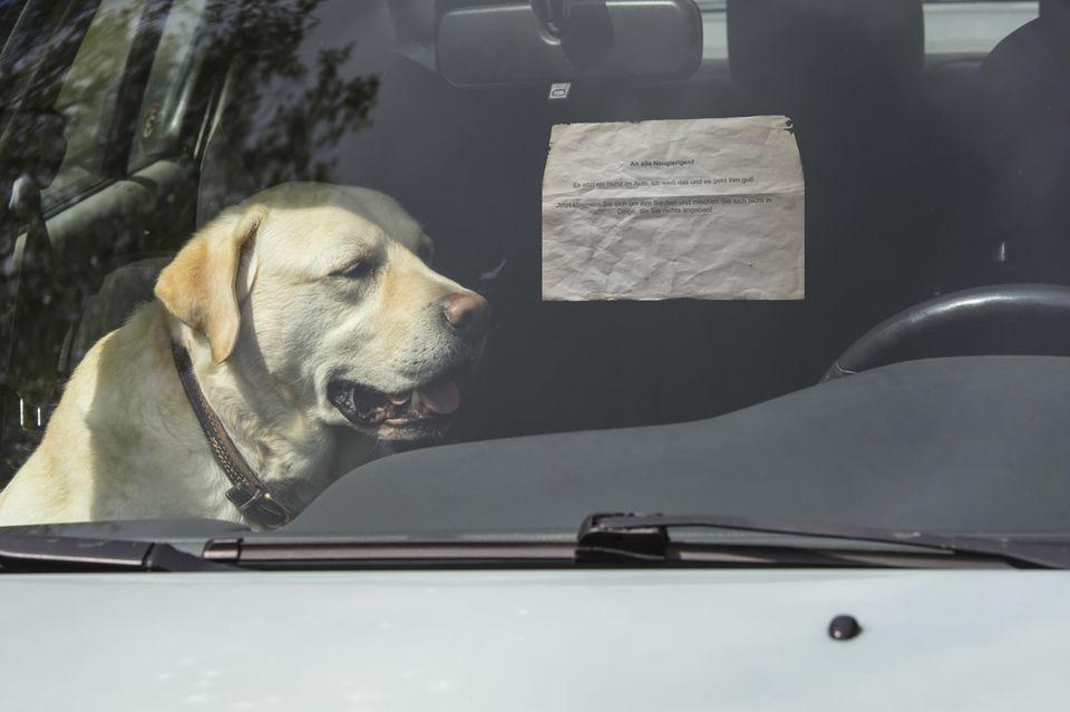 Hund im Auto mit Notiz an der Scheibe
