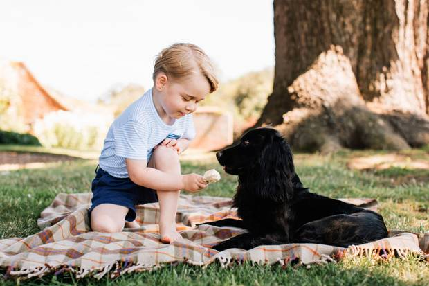 Der dreijährige Prinz George gibt Familienhund Lupo etwas von seinem Eisab.