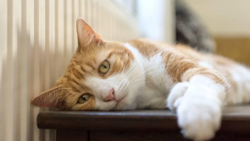 Cat Content: Die ungewöhnliche Liebesgeschichte zweier Katzen