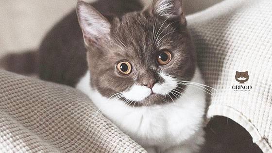 Cat Content: Kater Gringo begeistert mit haariger Besonderheit