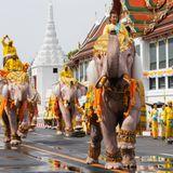 8. Mai 2019  In den Straßen von Bangkok findet zu Ehren des neuen Königs eine prächtige Elefantenparade statt.