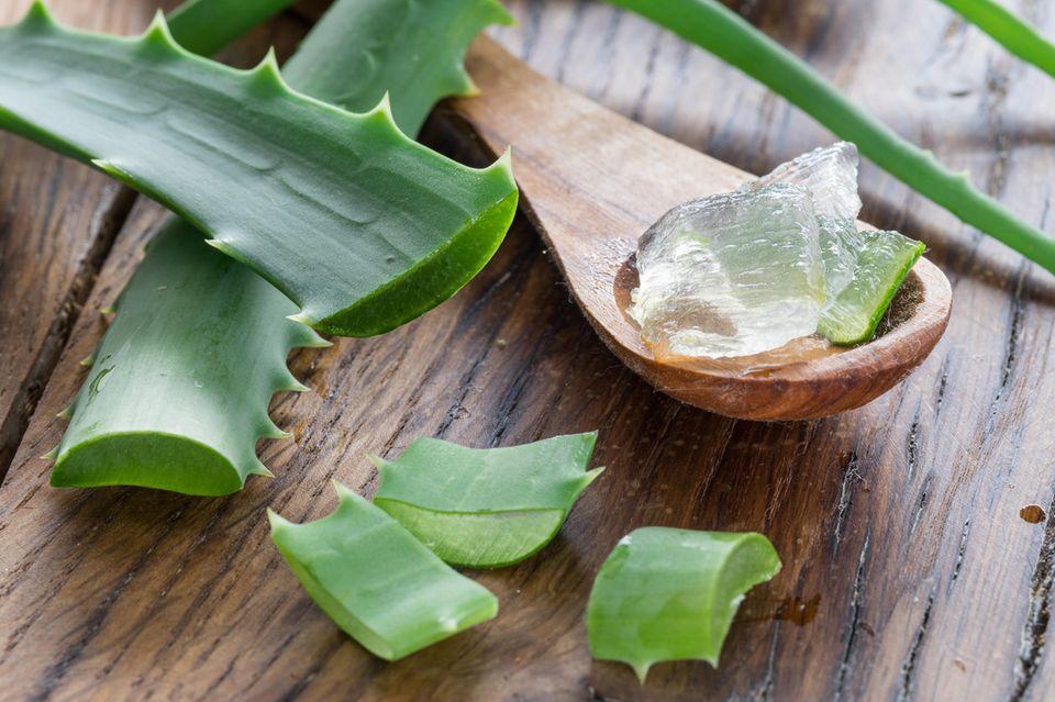 Aloe Vera kann die Beschwerden einer Sonnenallergie lindern