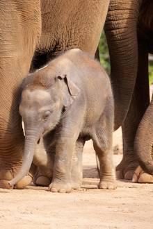 Elefanten-Baby Dumbo musste sterben (Symbolbild)
