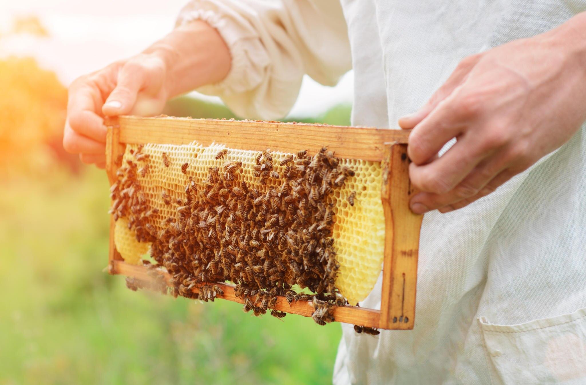 McDonald's versucht das Bienensterben zu verhindern.