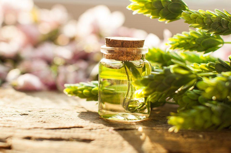 Teebaumölist ein hervorragendesHausmittel gegen Mitesser