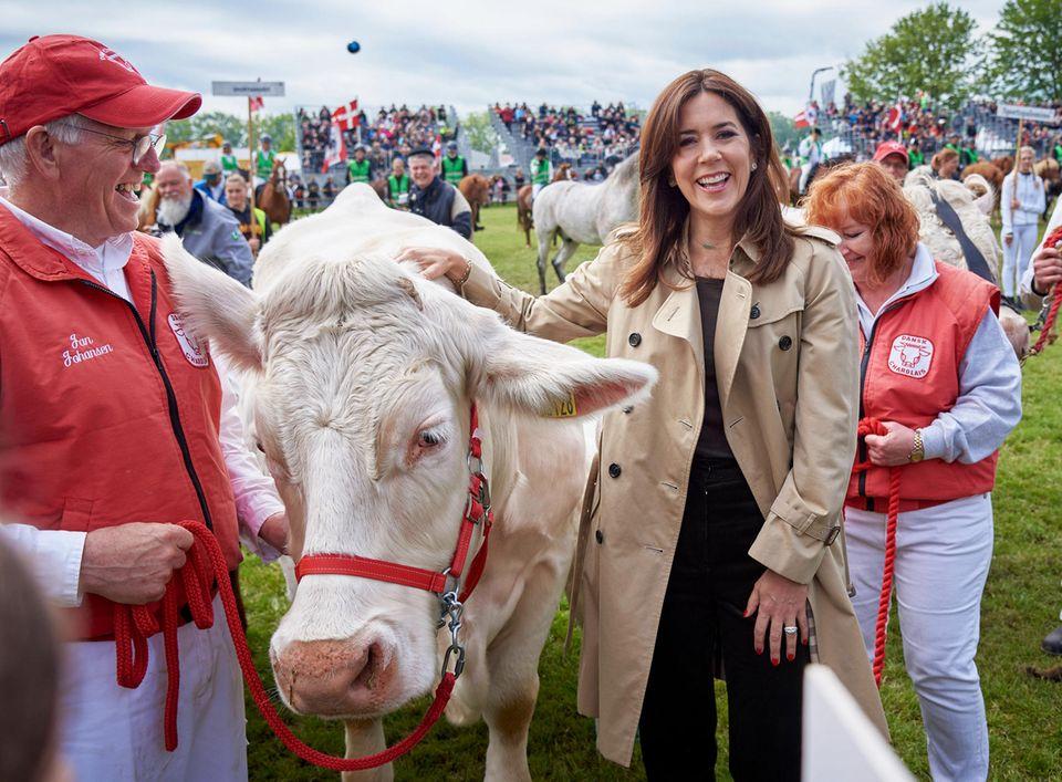 31. Mai 2019  Muuuh! Prinzessin Mary amüsiert sich bei der 50.Landwirtschaftsmesse in Roskilde tierisch.