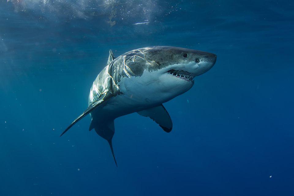 In den USA wurde ein Mädchen von einem Hai angegriffen.