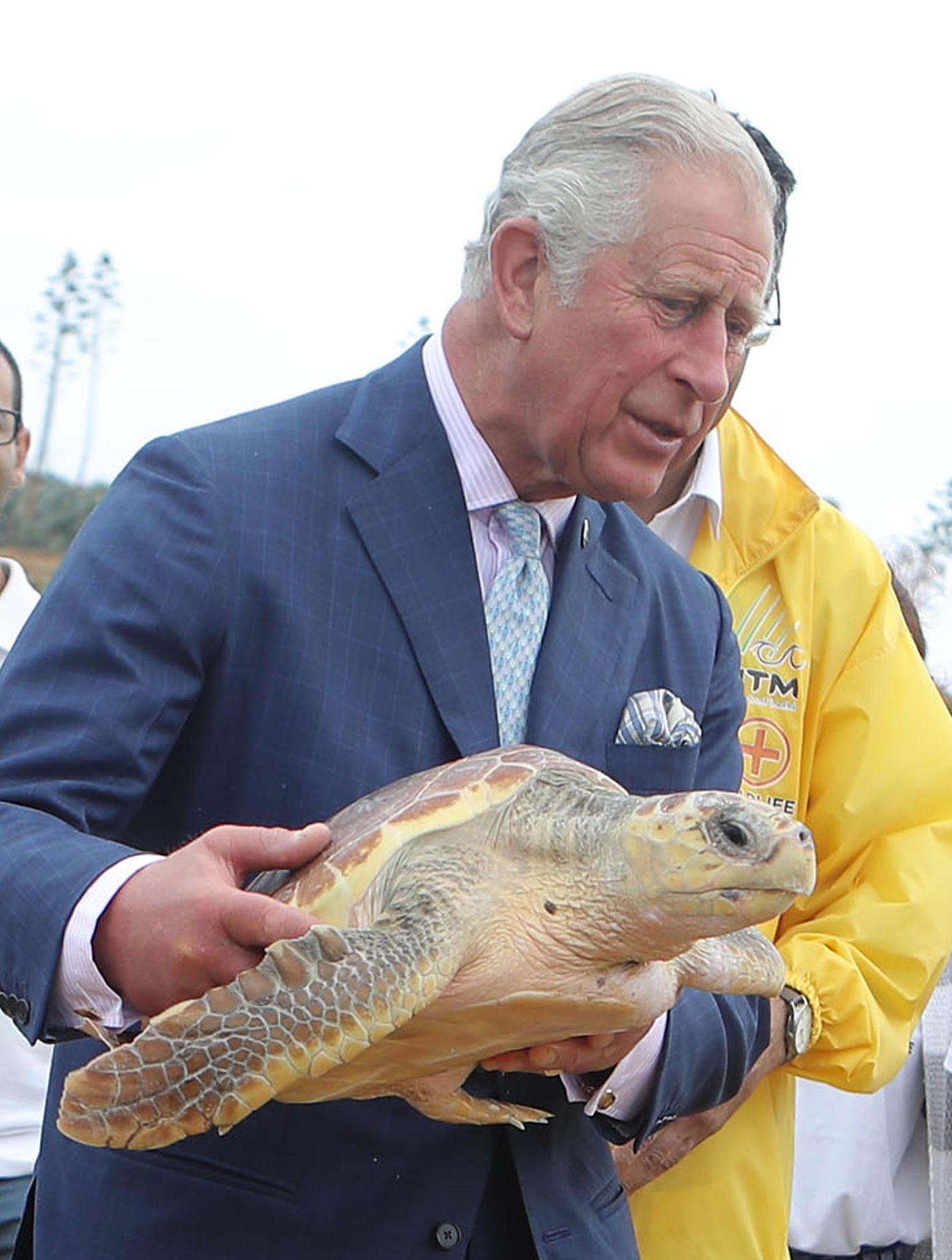 """Anlässlich des """"Turtle Rehabilitation Programme""""entlässt Prinz Charles auf Malta Wasserschildkröten zurückin die Freiheit."""