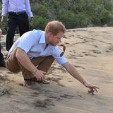 Auf der Karibikinsel Nevis begleitet Prinz Harry ein Schutzprojekt für kleine Schildkröten.