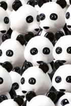 Bilderrätsel: Finden Sie den Hund zwischen all den Pandabären?