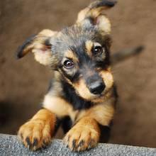 Hunde sind förderlich für die Gesundheit (Symbolbild).