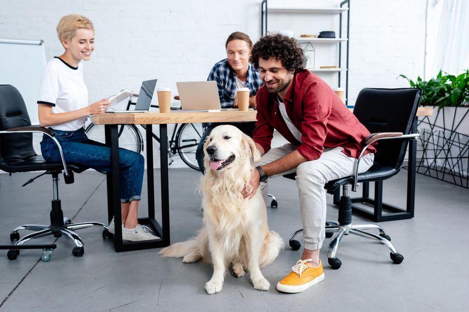 Hunde können auch im Büro für bessere Stimmung und mehr Entspannung sorgen.
