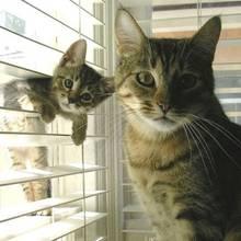 Cat Content: Diese Kätzchen sehen ihren Müttern zum Verwechseln ähnlich